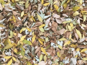 fall leaves of change