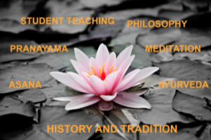 A lotus that displays all the aspects of a yoga teacher training.